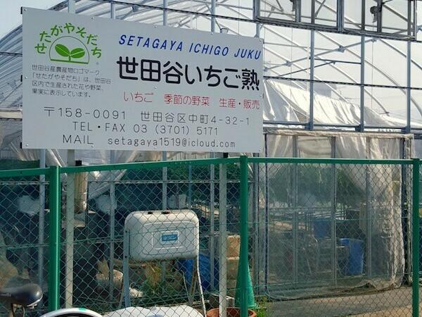 世田谷いちご狩り.jpg