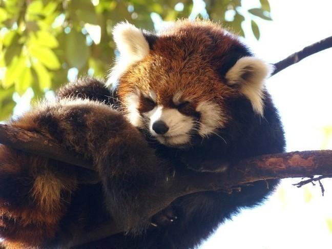 野毛山動物園2.jpg