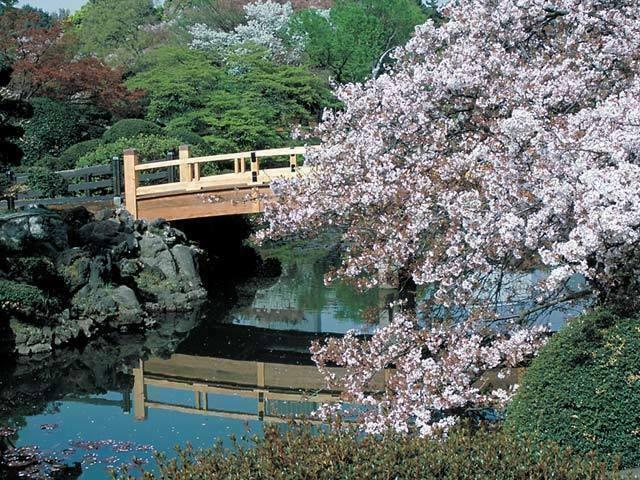 新宿御苑桜3.jpg