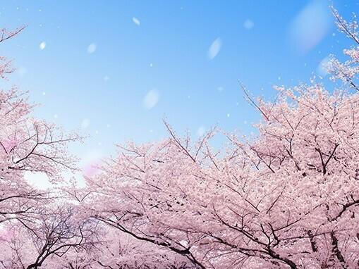 六義園昼桜.jpg
